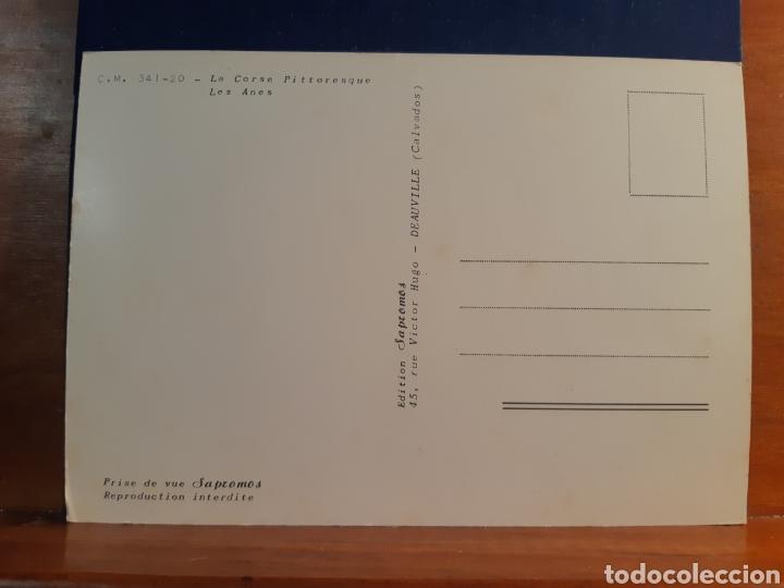 Postales: Antigua postal de dos burritos años 60 - Foto 2 - 244582825