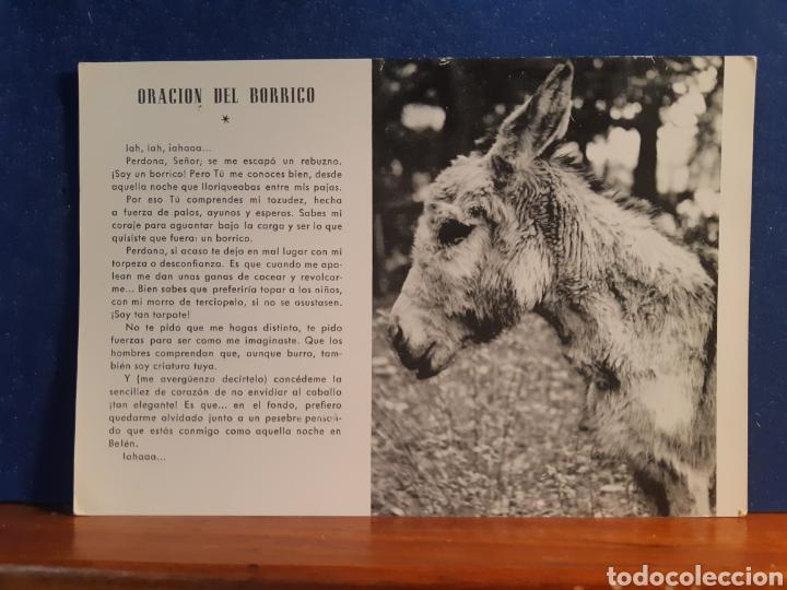 ANTIGUA POSTAL DE LA ORACIÓN DEL BORRICO AÑOS 60 (Postales - Postales Temáticas - Animales)