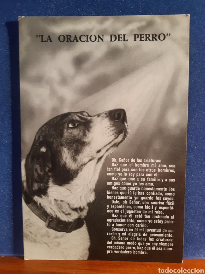 ANTIGUA POSTAL DE LA ORACIÓN DEL PERRO AÑOS 60 (Postales - Postales Temáticas - Animales)