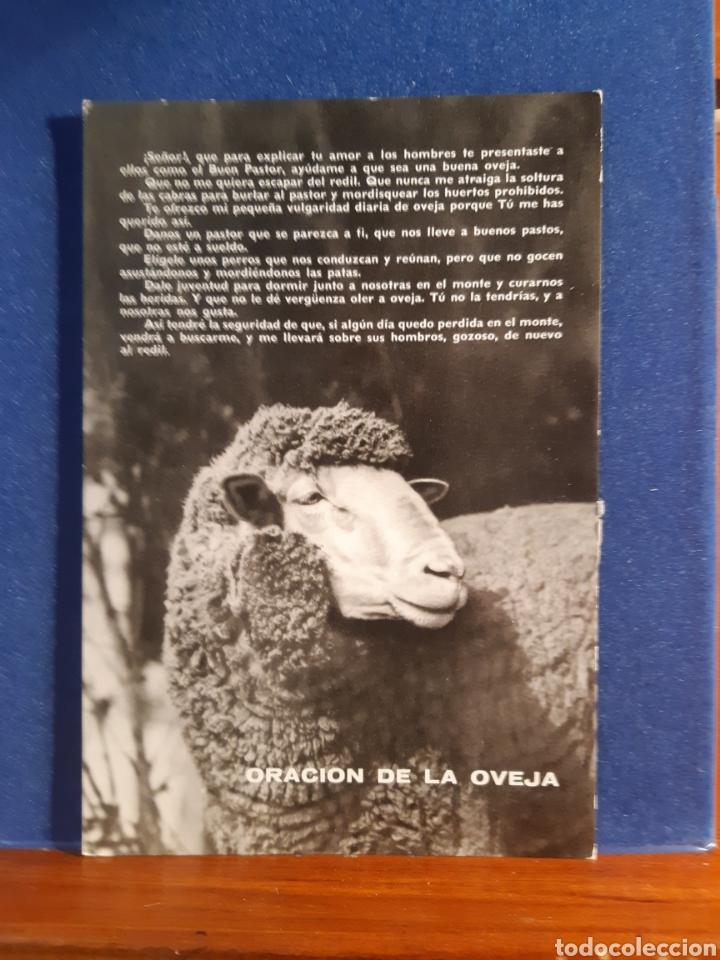 ANTIGUA POSTAL DE LA ORACIÓN DE LA OVEJA AÑOS 60 (Postales - Postales Temáticas - Animales)