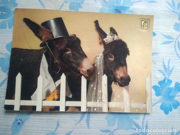 POSTAL BURRITOS (Postales - Postales Temáticas - Animales)