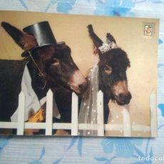 Postales: POSTAL BURRITOS. Lote 244686360
