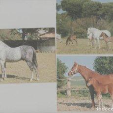 Postales: LOTE POSTALES CABALLOS ANDALUCIA AÑOS 90. Lote 245410460