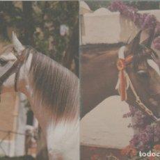 Postales: LOTE POSTALES CABALLOS ANDALUCIA AÑOS 90. Lote 245410540
