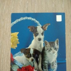 Postales: ANTIGUA POSTAL «CESTO CON DOS PERROS Y UN GATO». Lote 245934690