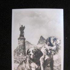 Postales: PERROS SAN BERNARDO-CHIENS DU ST BERNARD-FOTOGRAFICA-POSTAL ANTIGUA-(78.108). Lote 245997940