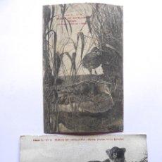 Postales: P-12478. MUSEU DE CATALUNYA. 2 POSTALS SENSE CIRCULAR. BECADA I MARTRA. PRINCIPIS S. XX. Lote 252844145