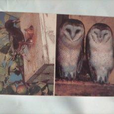 Postales: ANTIGUA POSTAL AVES PAJAROS ORINITOLOGIA - LA DE LA FOTO - BUHOS O LECHUZAS. Lote 256137085