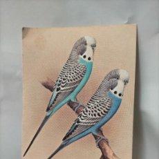 Postales: ANTIGUA POSTAL AVES PAJAROS ORINITOLOGIA - LA DE LA FOTO - PERIQUITOS. Lote 256137525