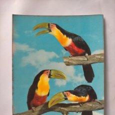 Postales: ANTIGUA POSTAL AVES PAJAROS ORINITOLOGIA - LA DE LA FOTO - TUCANES TUCAN. Lote 256138830