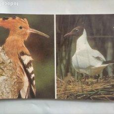 Postales: ANTIGUA POSTAL AVES PAJAROS ORINITOLOGIA - LA DE LA FOTO -. Lote 256139110