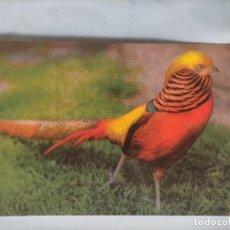 Postales: ANTIGUA POSTAL AVES PAJAROS ORINITOLOGIA - LA DE LA FOTO - GOLDFASAN. Lote 256139190