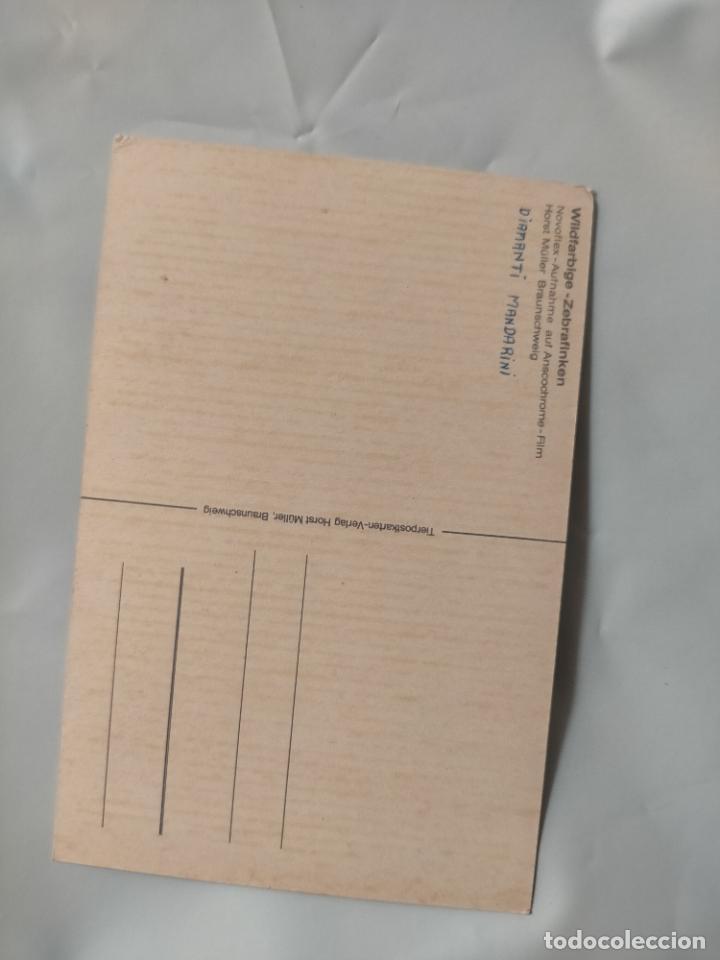 Postales: ANTIGUA POSTAL AVES PAJAROS ORINITOLOGIA - LA DE LA FOTO - DIAMANTE MANDARIN - Foto 2 - 256139310