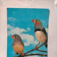 Postales: ANTIGUA POSTAL AVES PAJAROS ORINITOLOGIA - LA DE LA FOTO - DIAMANTE MANDARIN. Lote 256139310