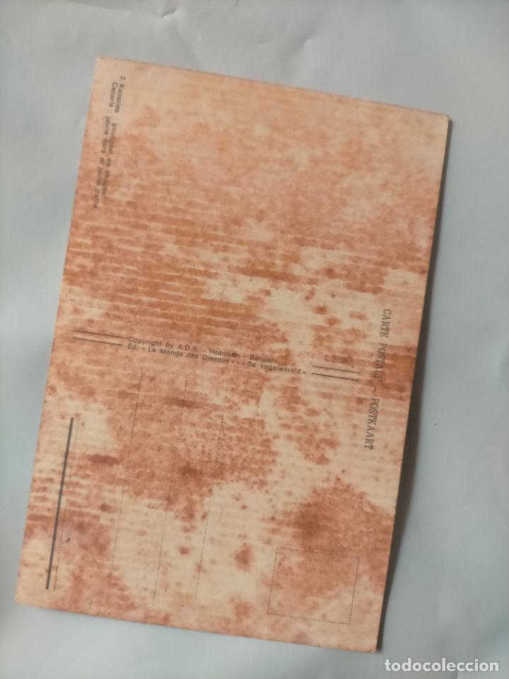 Postales: ANTIGUA POSTAL AVES PAJAROS ORINITOLOGIA - LA DE LA FOTO - CANARIOS - Foto 2 - 256139375