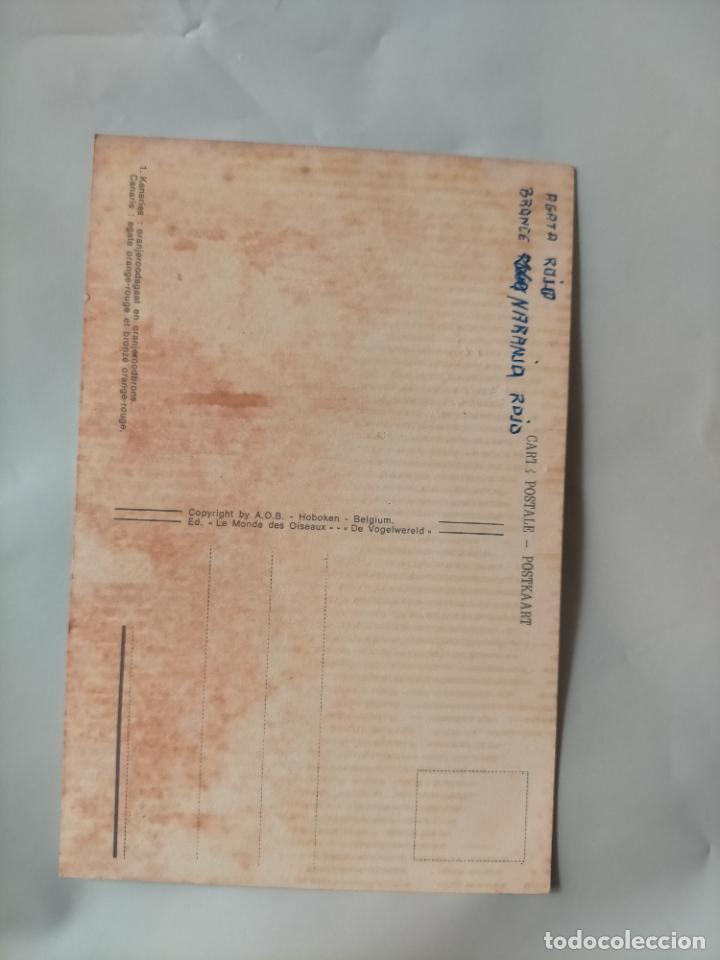 Postales: ANTIGUA POSTAL AVES PAJAROS ORINITOLOGIA - LA DE LA FOTO - CANARIOS BRONCE NARANJA ROJO AGATA - Foto 2 - 256139515