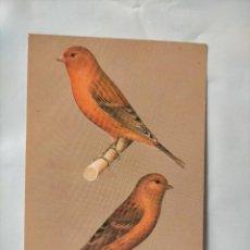 Postales: ANTIGUA POSTAL AVES PAJAROS ORINITOLOGIA - LA DE LA FOTO - CANARIOS BRONCE NARANJA ROJO AGATA. Lote 256139515