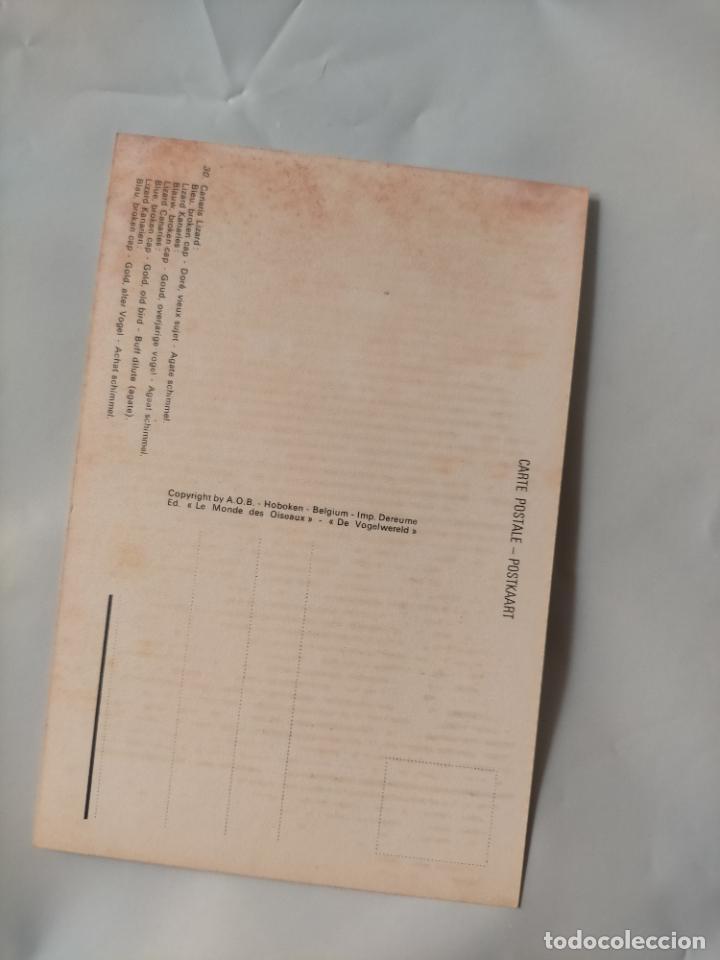 Postales: ANTIGUA POSTAL AVES PAJAROS ORINITOLOGIA - LA DE LA FOTO - CANARIOS CANARIS LIZARD - Foto 2 - 256139670