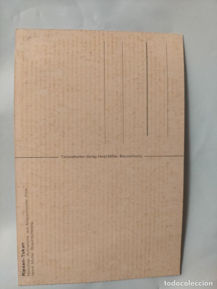 Postales: ANTIGUA POSTAL AVES PAJAROS ORINITOLOGIA - LA DE LA FOTO - TUKAN TUCAN - Foto 2 - 256139730