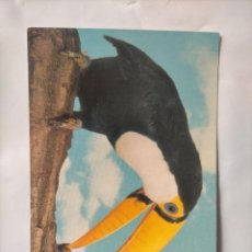 Postales: ANTIGUA POSTAL AVES PAJAROS ORINITOLOGIA - LA DE LA FOTO - TUKAN TUCAN. Lote 256139730