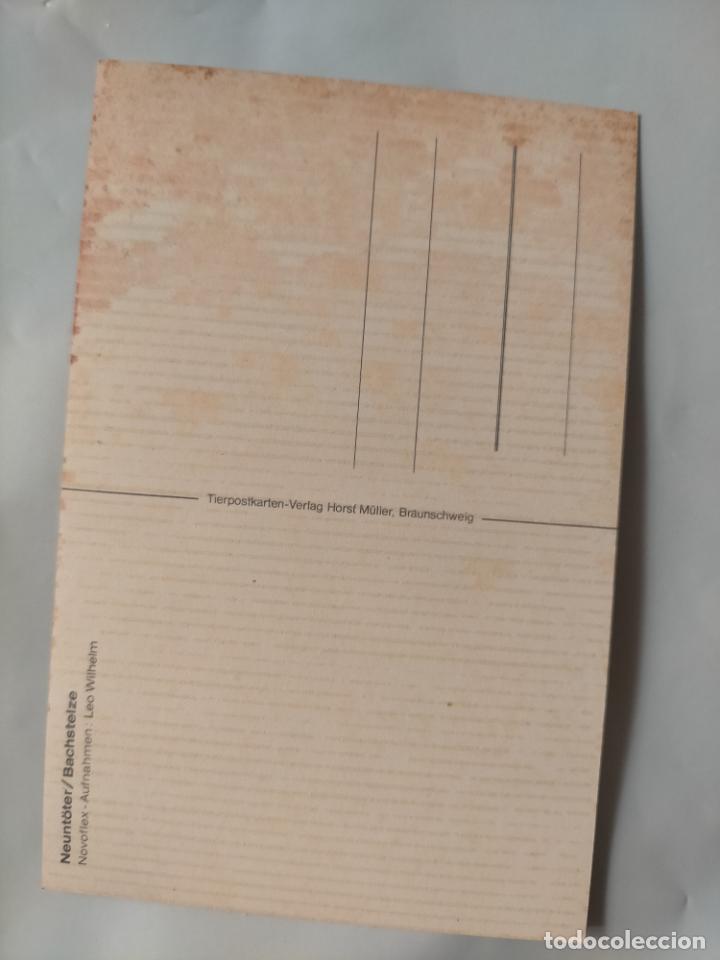 Postales: ANTIGUA POSTAL AVES PAJAROS ORINITOLOGIA - LA DE LA FOTO - NIDOS CRIAS - Foto 2 - 256139795
