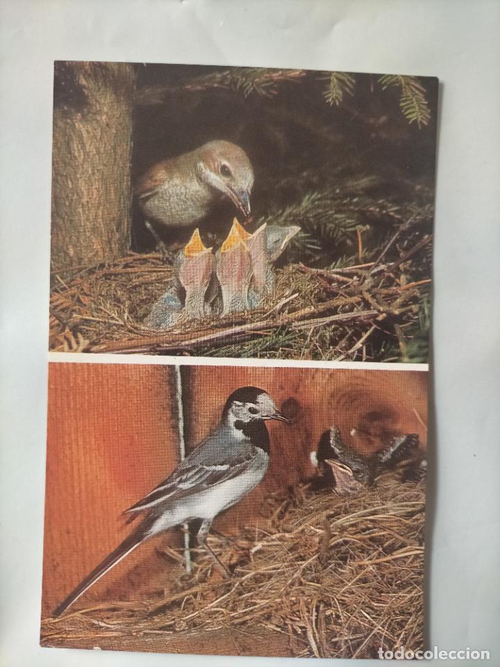 ANTIGUA POSTAL AVES PAJAROS ORINITOLOGIA - LA DE LA FOTO - NIDOS CRIAS (Postales - Postales Temáticas - Animales)