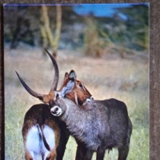 Postales: POSTAL FAUNA AFRICANA-ANTILOPES. CIRCULADA.. Lote 262019740