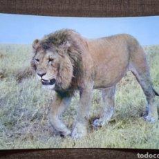 Postales: POSTAL FAUNA AFRICANA-LEON. SIN CIRCULAR.. Lote 262019855