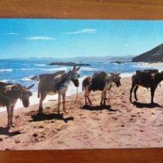 Postales: POSTAL BURRITOS ARENEROS. Lote 262604650