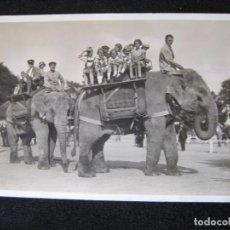 Postales: ELEFANTES-FOTOGRAFICA-POSTAL ANTIGUA-(80.551). Lote 262626000