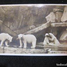 Postales: OSOS POLARES-FOTOGRAFICA-POSTAL ANTIGUA-(80.552). Lote 262626070
