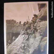 Postales: MONOS-FOTOGRAFICA-POSTAL ANTIGUA-(80.553). Lote 262626110
