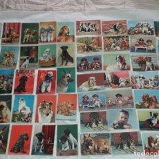 Postales: BELLO LOTE DE 50 ANTIGUAS POSTALES TEMÁTICA ANIMALES PERROS AÑOS 50 SIN CIRCULAR. Lote 262748440