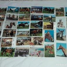 Postales: BELLO LOTE DE 37 ANTIGUAS POSTALES TEMÁTICA ANIMALES CABALLOS AÑOS 50 CASI TODAS SIN CIRCULAR. Lote 262750280
