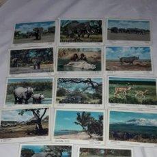 Postales: BELLO LOTE DE 14 ANTIGUAS POSTALES TEMÁTICA ANIMALES DE ÁFRICA FAUNA Y FLORA AÑOS 50 SIN CIRCULAR. Lote 262751325