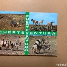 Postales: POSTAL CABRAS FUERTEVENTURA (TITULADAS EN INTERIOR ESCENAS TÍPICAS). Lote 262807445