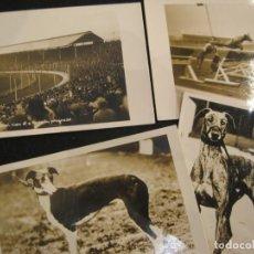 Postales: CARRERAS DE GALGOS-LOTE DE 4 POSTALES FOTOGRAFICAS-VER FOTOS-(80.889). Lote 264448199