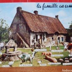 Postales: POSTAL - LA FAMILIA AL COMPLETO. Lote 264448829