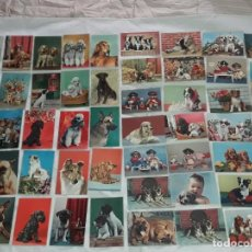 Postales: BELLO LOTE DE 50 ANTIGUAS POSTALES TEMÁTICA ANIMALES PERROS AÑOS 50 SIN CIRCULAR. Lote 264681039