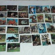 Postales: BELLO LOTE DE 33 ANTIGUAS POSTALES TEMÁTICA ANIMALES AÑOS 50 CASI TODAS SIN CIRCULAR. Lote 264830769