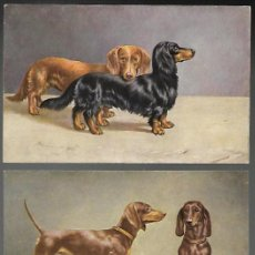 Postales: COLECCION DE 6 POSTALES T.S.N., SERIE 1860 (6 DESS.). PERROS DACHSHUND. SIN CIRCULAR.. Lote 268811559