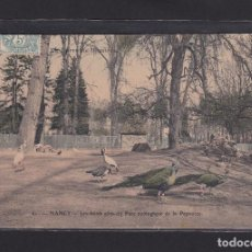 Postales: POSTAL DE FRANCIA - 61. NANCY. - LES HOTES AILÉS DU PARC ZOOLOGÍQUE DE LA PÉPINIÈRE - PÁJAROS. Lote 268949344