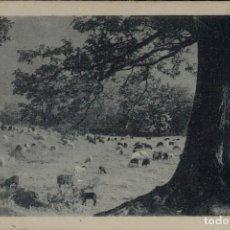 Postales: DEHESA. POSTAL ANTIGUA CIRCULADA 1921. TOROS. VACAS. OVEJAS. GANADO. Lote 269990803