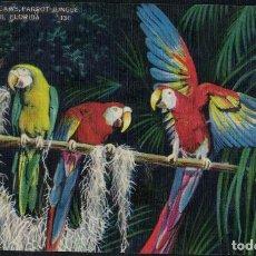 Postales: BEAUTIFUL MACAWS PARROT JUNGLE. MIAMI FLORIDA 130 / JUNGLA PARQUE DE LOS LOROS. COTORRAS. Lote 270092653