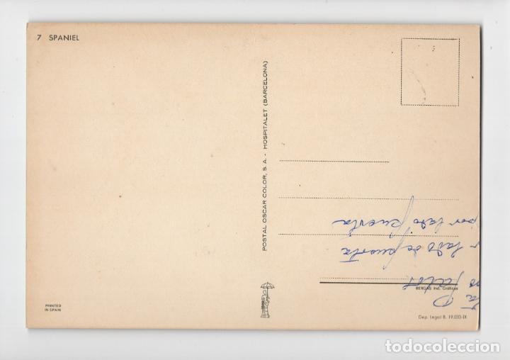 Postales: Cocker Spaniel ♦ Postal Oscarcolor, 1966 - Foto 2 - 275020038