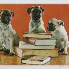 Postales: ANIMALES DOMÉSTICOS Nº 15. CARLINO ♦ ESCUDO DE ORO, 1967. Lote 275020288