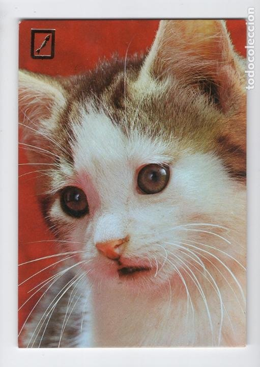 BONITO GATITO (Postales - Postales Temáticas - Animales)