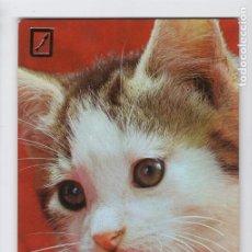 Postales: BONITO GATITO. Nº SERIE 3113/1 ♦ ESCUDO DE ORO, 1976. Lote 275060243
