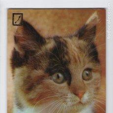 Postales: BONITO GATITO. Nº SERIE 3113/2 ♦ ESCUDO DE ORO, 1976. Lote 275060308