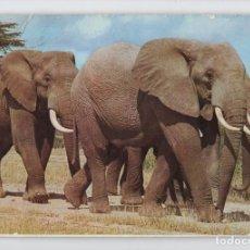 Postales: IMPRESIONANTES ELEFANTES AFRICANOS, KENYA ♦ EDITION EAST AFRICA. Lote 275061153